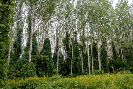 hungarian forest at the danube river