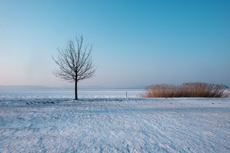 bare tree at the white frozen lake with dried reeds Imagens