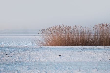 frozen lake with dried reeds, hills in background