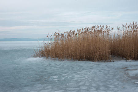 reeds on a frozen lake in Europe