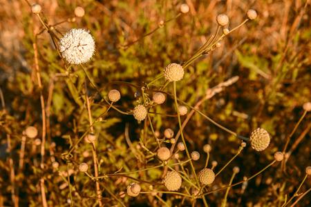 mediterranean flowers and sunset tones
