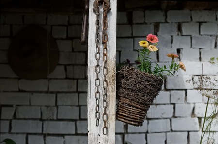 flowers in small hanging basket, rusty chain and white brick wall in background - rural still life Imagens - 99284274