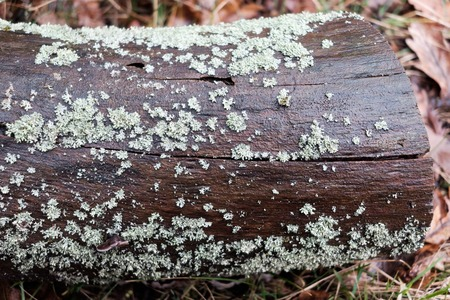 lichen on brown wet log in the forest - close up Imagens