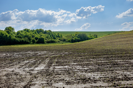 muddy arable land with forest in background and blue sky, backlight, Europe, Hungary  agriculture and countryside - spring