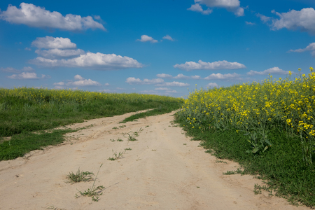 green and yellow young colza field with dirty road and blue sky, Europe, Hungary / agriculture and countryside - spring Imagens - 100551349