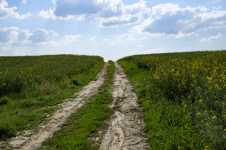 green and yellow young colza field with dirty road and blue sky, Europe, Hungary  agriculture and countryside - spring