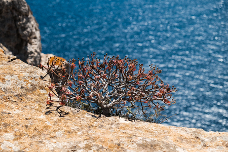 mediterranean feeling - small bush on the edge of the cliff and the blue sea in background