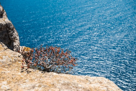 mediterranean summer feeling - small bush on the edge of the cliff and the blue sea in background