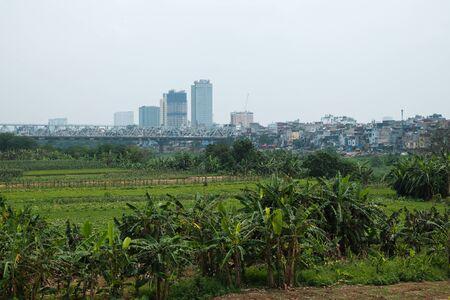 banana plantation at edge of Hanoi city - skyscrapers in background