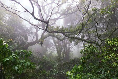 Hong Kong tropical forest fresh foggy morning