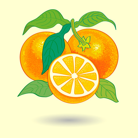 Oranges with Leaves Vector Illustration.