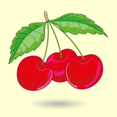 fruit: Three Cherries with Leaves Vector Illustration. Illustration