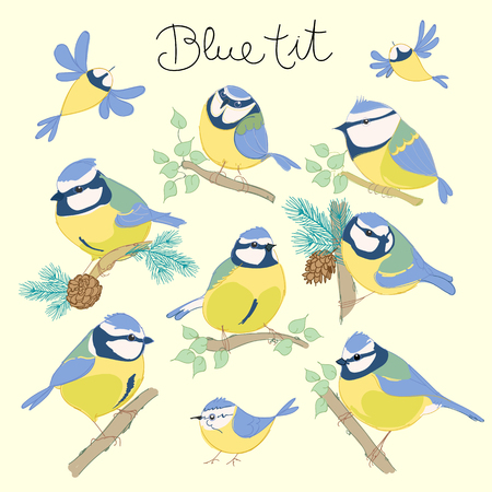 Cartoon birds. Blue tit set. vector illustration