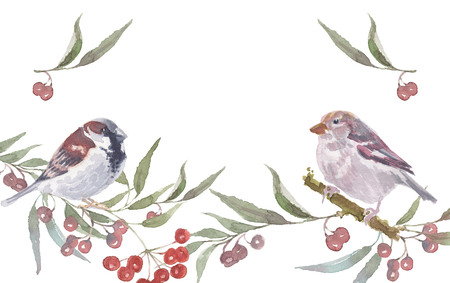 sparrow male and female with berry branches. Watercolor handmade vector illustration