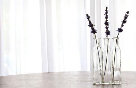 windows: Lavender Stock Photo