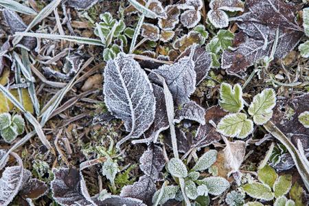 december: December frozen leaves on the field ground