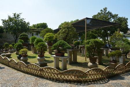 Bonsai tree in a garden. Row of bonsai trees. Foto de archivo - 111832793