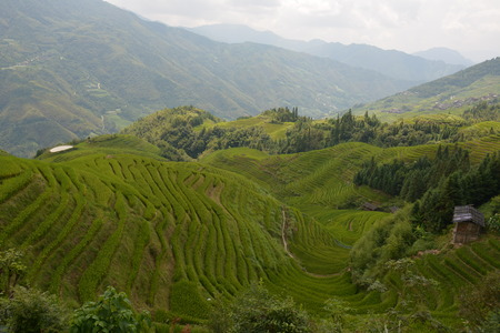 Views of green terraced fields, (Dragon's Backbone) China Foto de archivo - 111832846