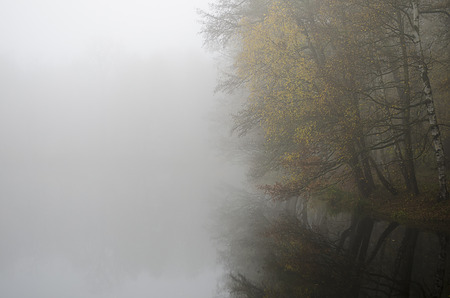 misty lake with reflection of trees in it