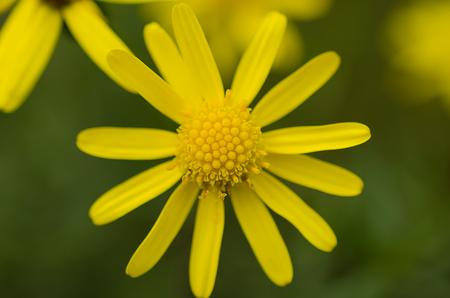 yellow flower on field