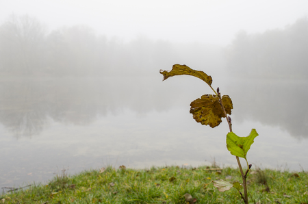 sprout with leaves on a background of foggy lake Stock Photo