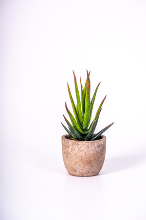 a small desert plant in a flower pot made of wood