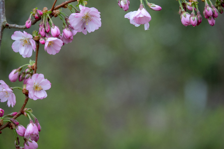 a close-up of pink blossoms in spring