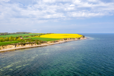 on the steep coast of Boltenhagen the rapeseed blooms in bright yellow Banco de Imagens