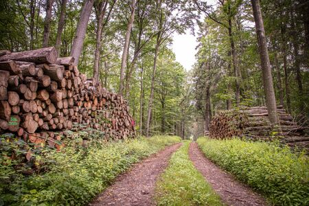 cut wood lies in large stacks on the left and right of a forest path