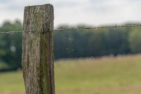 a spiders web hanging from a barbed wire fence