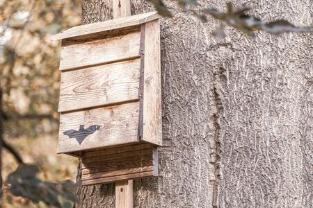 a bat box hangs from a tree in the forest and provides shelter for bats