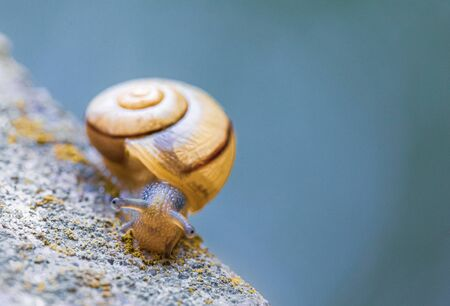 a small snail with a yellow snail shell crawls on a concrete pile