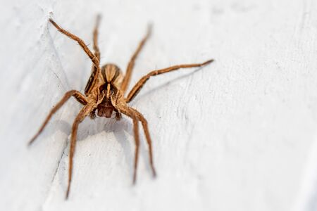 a macro shot of a brown spider sitting on a white wall