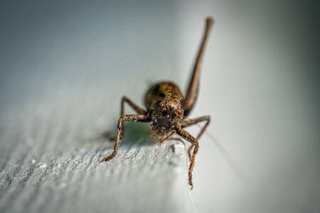a macro shot of a brown grasshopper sitting on a white wall