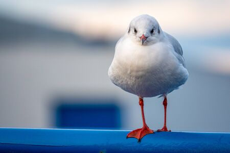 a close-up of a seagull standing on a railing in the harbour