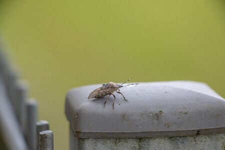on a fence post sits a little brown bug