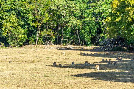 on an Australian farm many Kangarus live fenced in on a meadow