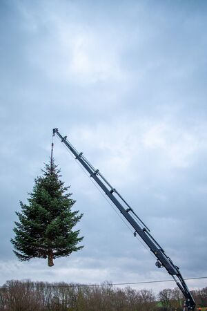 a sawn off fir tree hangs on a crane to be transported away