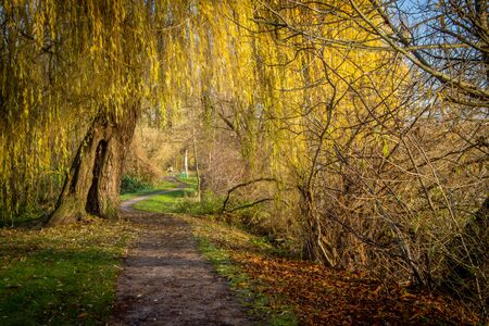 an autumn land stock shortly after sunrise and everything is yellow coloured Reklamní fotografie