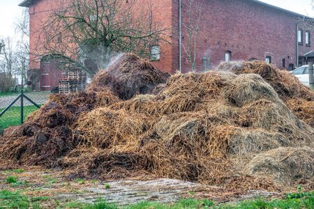 on a farm there is a steaming cow dung heap Banco de Imagens