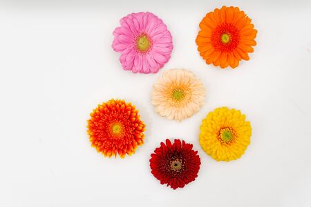 differently coloured Gerbera blossoms lie side by side on a white base
