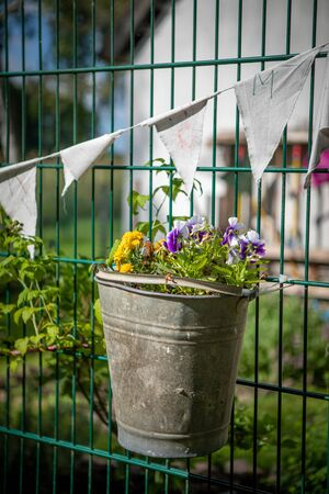on a fence hangs a metal bucket, which is planted with flowers Фото со стока