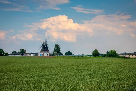 behind a green cornfield is an old windmill and the sky is blue with white clouds Stockfoto - 150296158