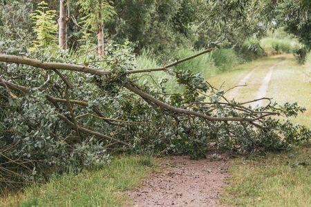 a fallen tree blocks a hiking trail