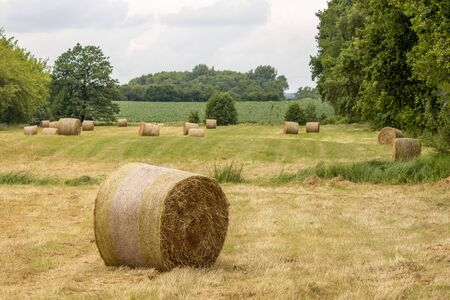 on a mowed meadow lie pressed round bales of hay Stockfoto - 150296166