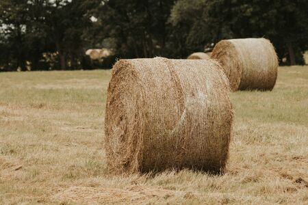 on a mowed meadow lie pressed round bales of hay Stockfoto - 150296322