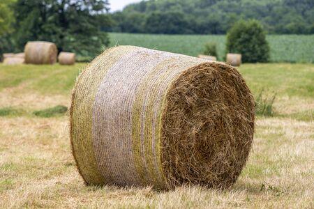 on a mowed meadow lie pressed round bales of hay Standard-Bild