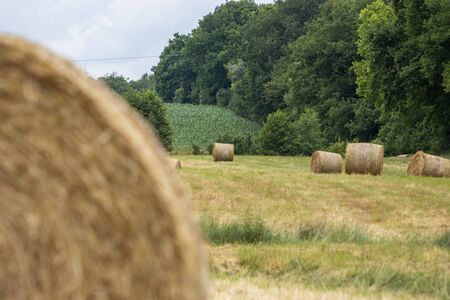 on a mowed meadow lie pressed round bales of hay Banque d'images