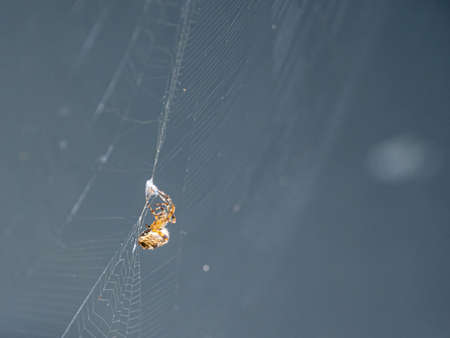a big brown spider sits in its web and waits for prey