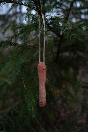 Carrots hang on a coniferous tree at Christmas as food for birds Reklamní fotografie